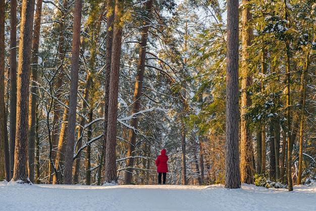 Силуэт человека в красной куртке, стоящего в солнечном лесу в холодный зимний день.