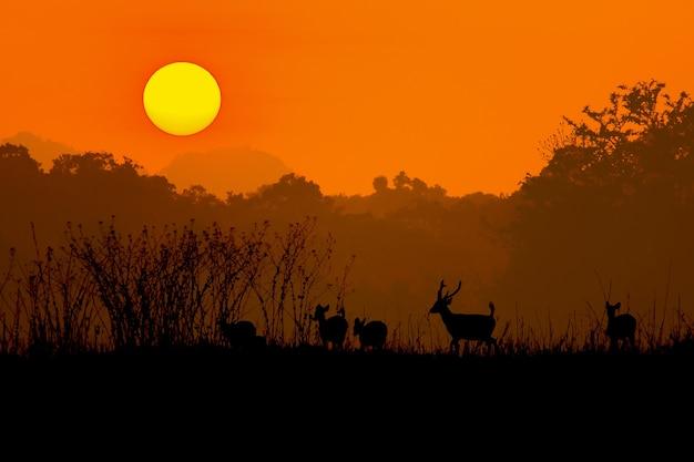 霧の中で赤い鹿のシルエット