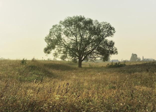 Силуэт дерева в утреннем свете