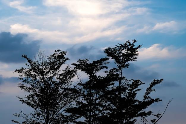 Силуэт дерева с закатом позади