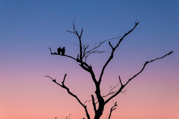 夕方の日没時に枝に立っている2羽の鳥と木のシルエット