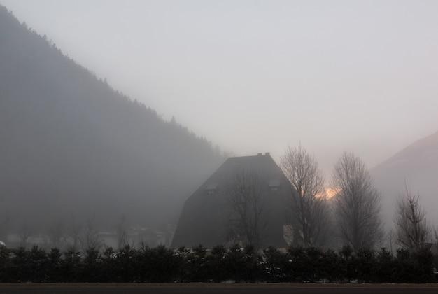 日の出の間の裸木のシルエット