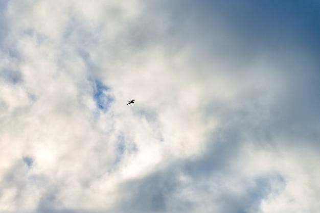 Силуэт птицы, летящей в голубом небе с белыми пушистыми облаками. парящая в облаках чайка как символ свободы, легкости и скорости. текстура неба.