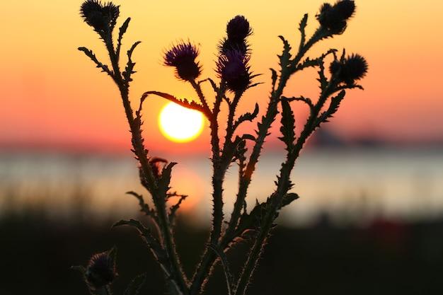 赤い夕焼け空と太陽の円盤を背景にごぼうのシルエット
