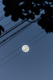 브라질 리우데자네이루에 아름다운 보름달이 있는 케이블과 나뭇잎의 실루엣.