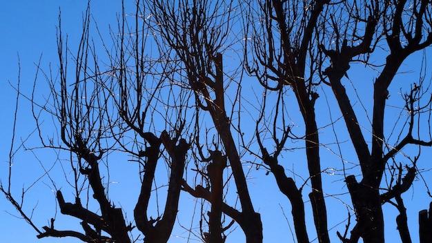 Силуэт сухой стойки деревьев зимой и ясного голубого неба в токио, япония.