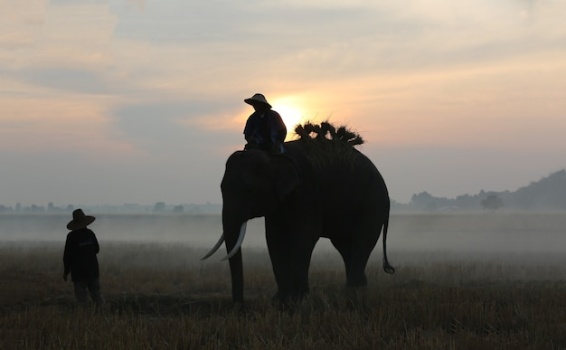 スリンタイの日没アジアゾウの背景に象と木のシルエット