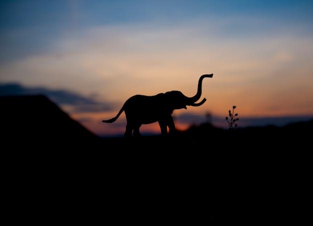 Силуэт животных слона на фоне заката.