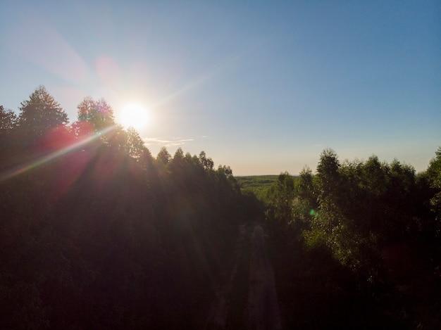 Силуэт плантации эвкалипта в солнечный день.