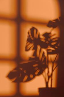 벽에 실내 식물의 실루엣