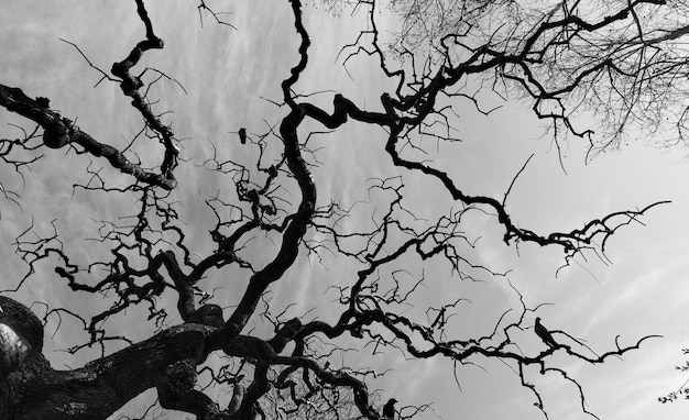 Силуэт старого голого дерева с фантастическими изогнутыми ветвями