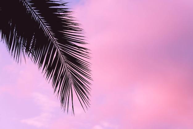 Силуэт пальм на фоне пурпурного розового неба