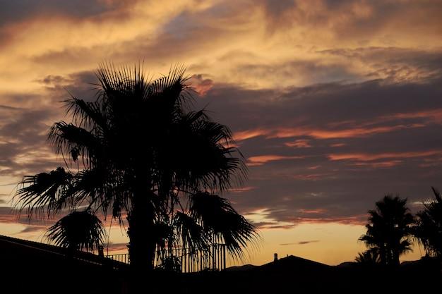 シチリア島の日没時のヤシの木のシルエット