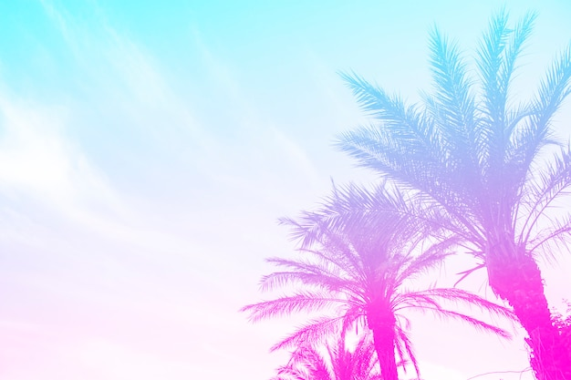 Силуэт пальм с ярким летним градиентом на ярко-синем небе летнего неба. концепция тропика, отдыха и путешествий