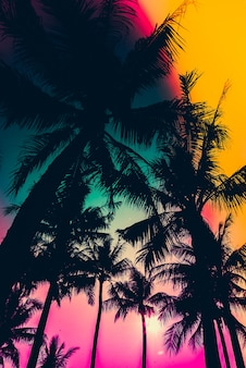 Silhouette of palm trees with colorful sky