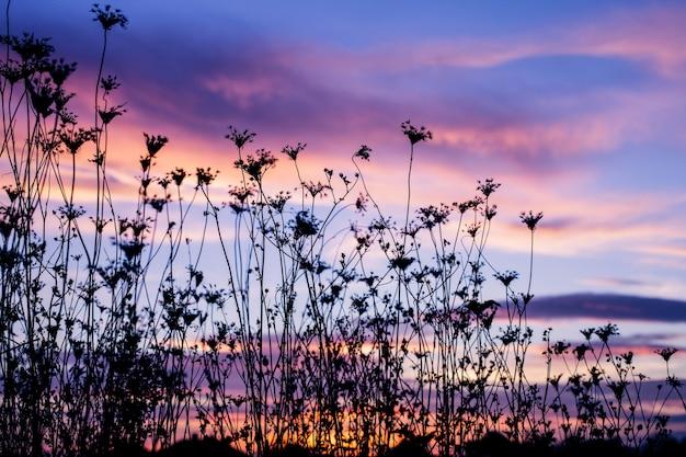 여름에 일몰의 배경에 대한 식물의 실루엣