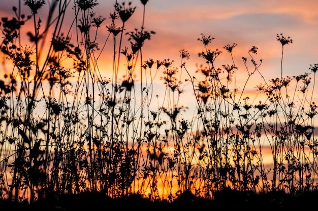 夕暮れ時の植物のシルエット