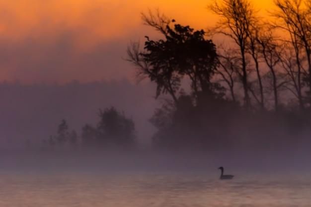 ミシガン半島の木の周りの日の出のシルエット