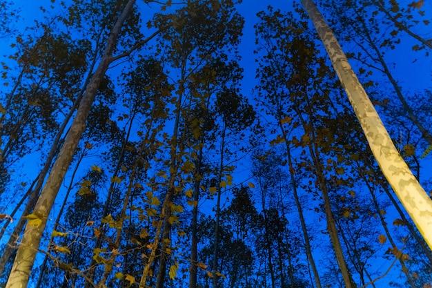 밤에 나무의 실루엣