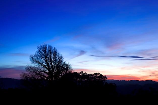 夕日後の木のシルエット