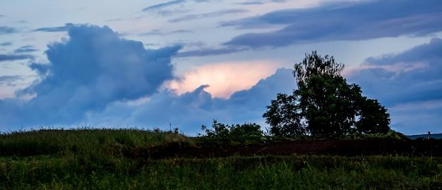 朝の暗い荒れ模様の空を背景に木のシルエット