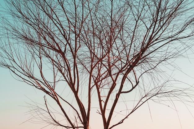 空色の背景に葉のない木の枝のシルエット。