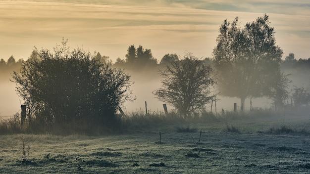 日の出時に濃い霧に覆われた木のシルエット