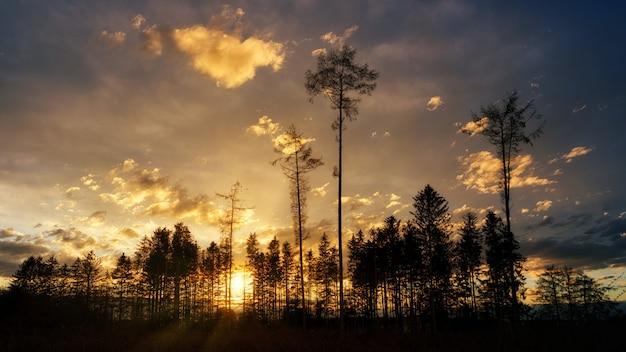 日没時の曇り空の下の木のシルエット