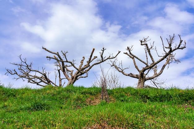 雲と緑の草地と青い空の上の裸の枝を持つ木のシルエット