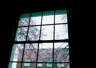 Silhouette of window panes with spring blossoms in background