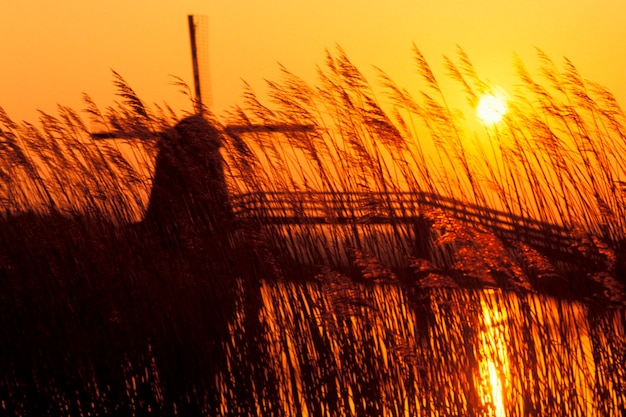 Silhouette of old-fashioned, wooden windmill with yellow setting sun, grass in foreground