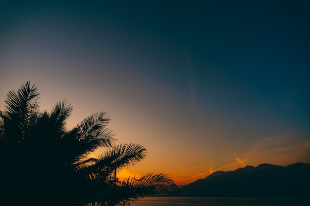The silhouette of palm tree branches against the sunset sky
