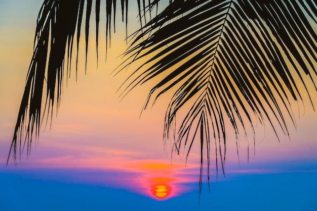 Силуэт пальмы
