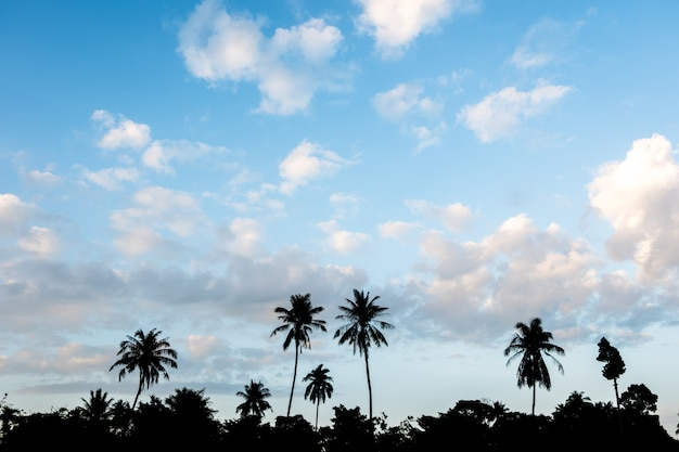 Silhouette of palm trees in beautiful blue sky.