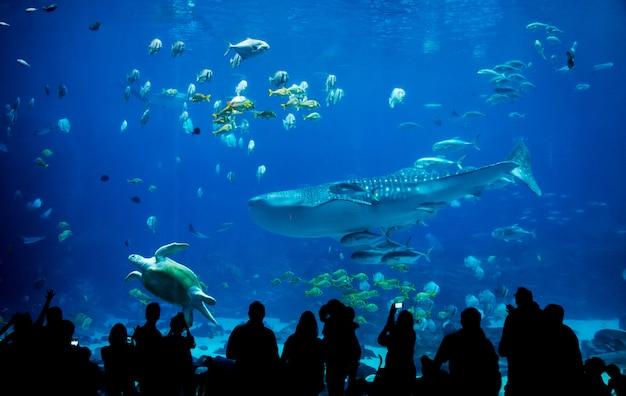 Силуэт людей в большом аквариуме