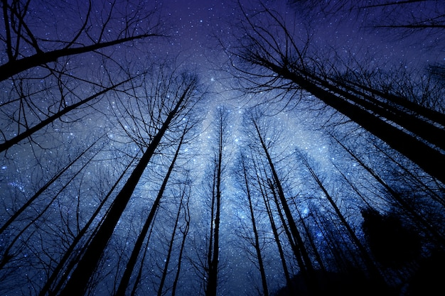 Silhouette perspective of the dried forest pine tree in the night with starry sky on backg