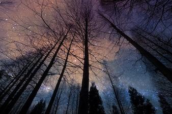 夜の乾燥した森林の松の木のシルエットの視点