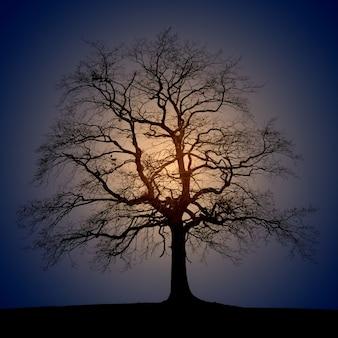 日の出中の木のシルエット写真
