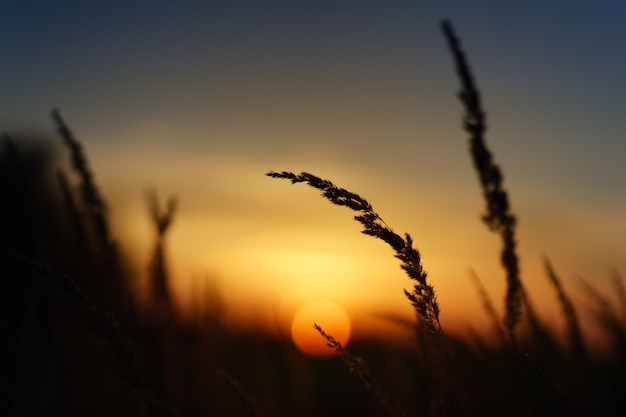 小麦のシルエット写真 無料写真