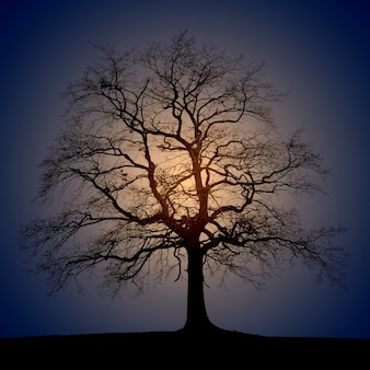 Silhouette photo of trees during sun rise