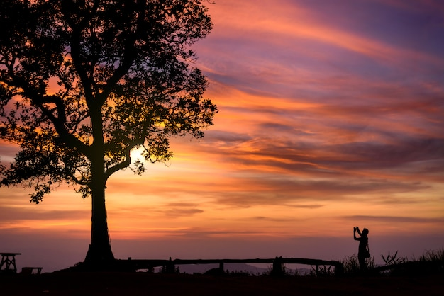 Silhouette of photographer taking picture under big tree in sunset