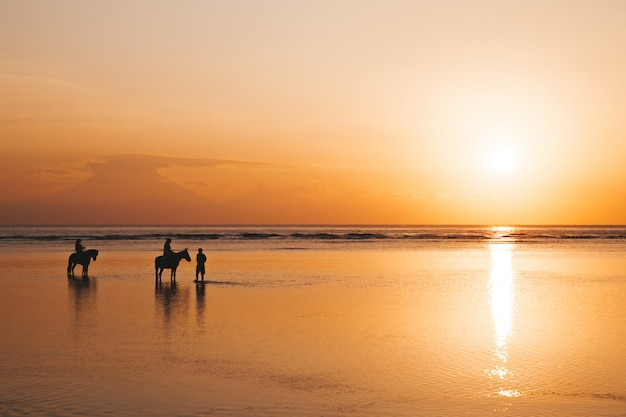 Profili il ritratto di giovani coppie romantiche che guidano a cavallo alla spiaggia. ragazza e il suo ragazzo al tramonto colorato d'oro