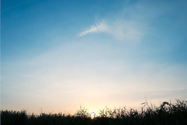 青い雲の空、風景の概念と松の木のシルエットロール。