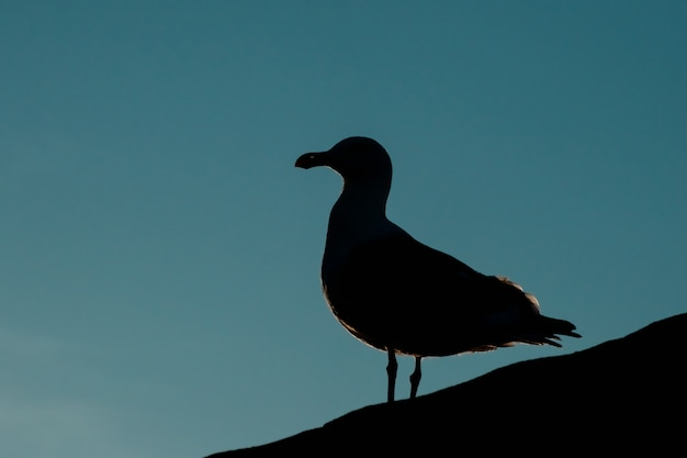 Silhouette of a seagull at dusk