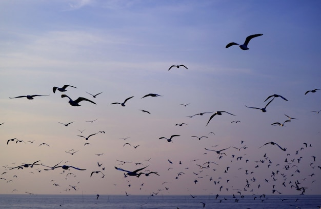 Silhouette of seagulls flying against pastel blue morning sky over the sea