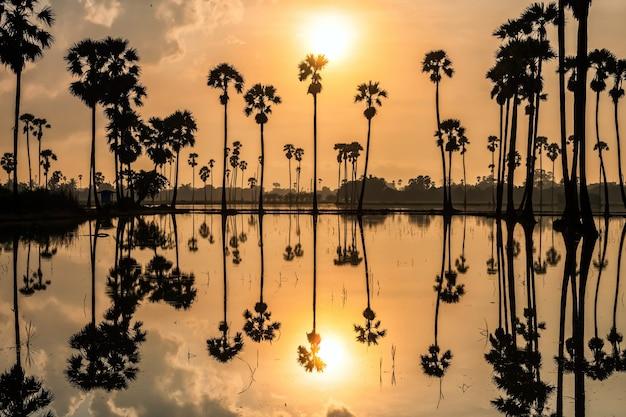 タイ、パトゥムターニー県、ドンタンサムコックの日の出の池に自然に映るシルエットのシュガーヤシの木の農場と農家の小屋。暖かい国、サイアムの有名な旅行先。