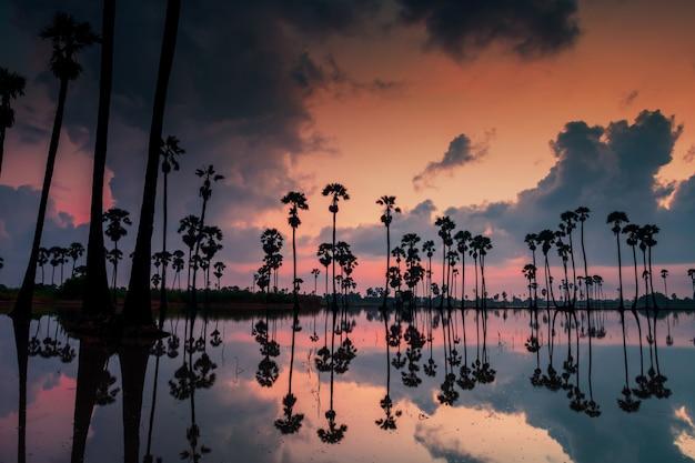 タイ、パトゥムターニー県、ドンタンサムコックの夜明けの水と薄明の空に雲が反射するシルエットの砂糖椰子の木。サイアムの有名な旅行のランドマークまたは写真の視点。
