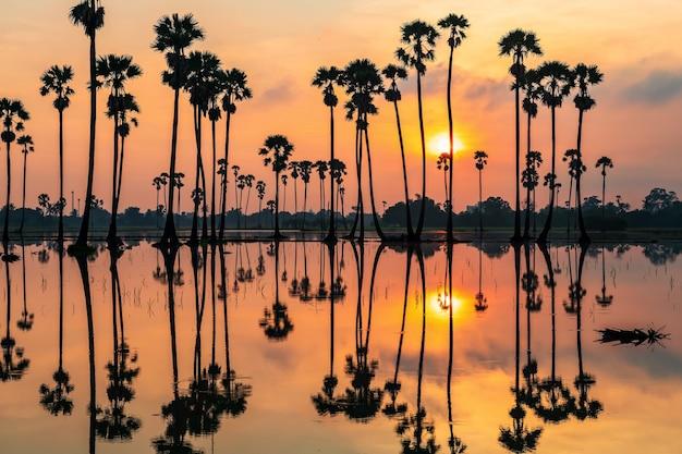 タイ、パトゥムターニー県、ドンタンサムコックの日の出の水と薄明の空にスカイラインの反射とシルエットの砂糖椰子の木。サイアムの有名な旅行先や写真のランドマーク。