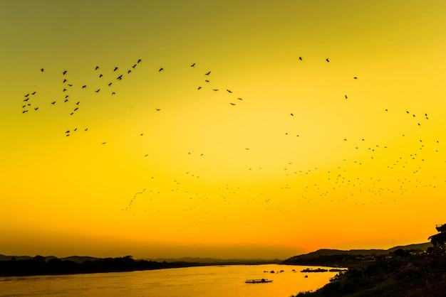 Silhouette sunset river evening with flock flying birds above lake yellow sky / mekong river sunset asia