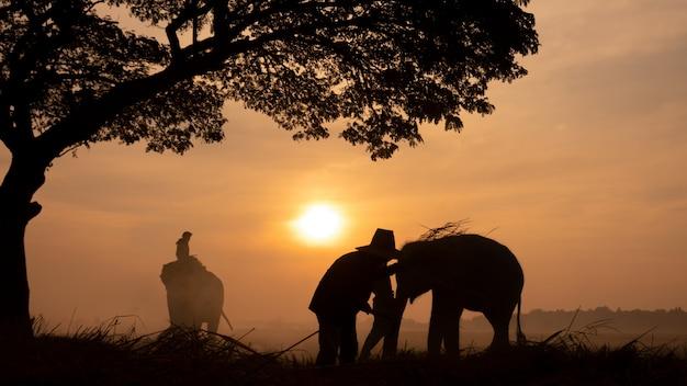Сельская местность таиланда; silhouette слон на предпосылке захода солнца, слон тайский в surin таиланде.